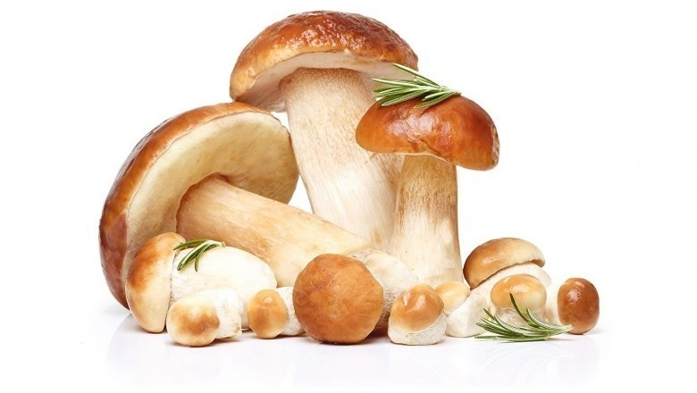 Mushroom's antioxidants may stave off aging-study reveals